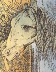 Lindo caballo, ¿no? ... Torcé la cabeza hacia tu izquierda y decime que bactracio ves