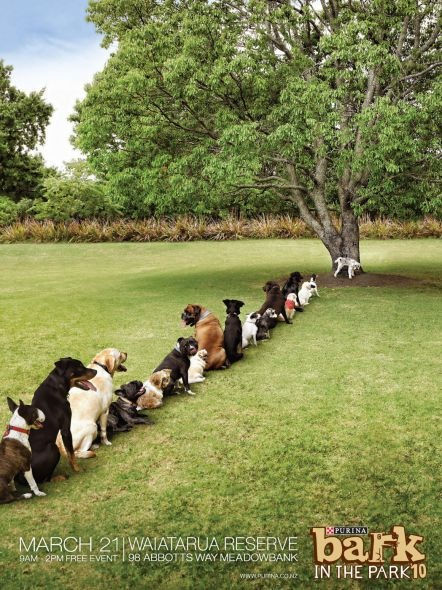 """Purina Bark in the Park es el mejor evento para perros, Nueva Zelanda. Me encantó la fila ordenada para """"ir al baño""""."""