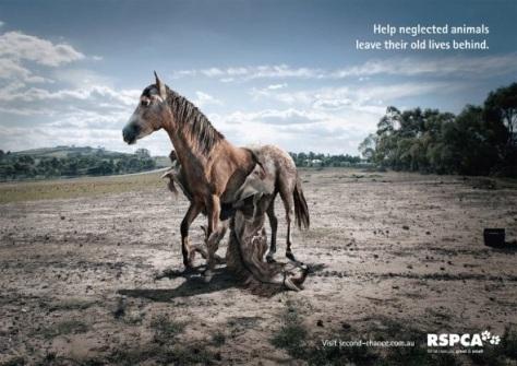 RSPCA  Ayude a los animales descuidados a dejar sus viejas vidas. Visita second-chance.com.au